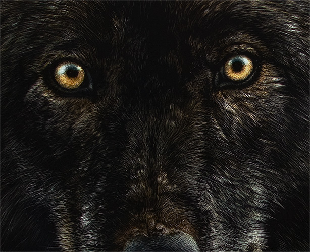 previewBlack Wolf With Purple Eyes