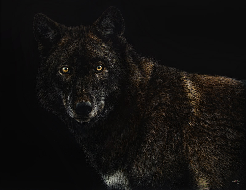 apparition black wolf xposted to a w wetcanvas